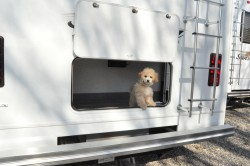 dog in rv, pets rv, dog rv